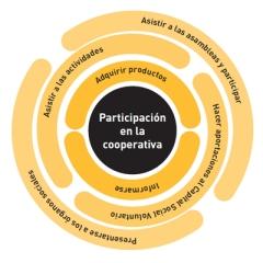 participacion-cooperativa