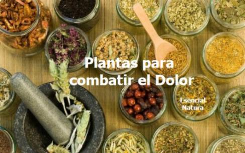 plantas-medicinales-contra-el-dolor-530x331