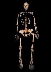 Esqueleto de uno de los 'Homo heidelbergensis' de la Sima de los Huesos / Javier Trueba, Madrid Scientific Films